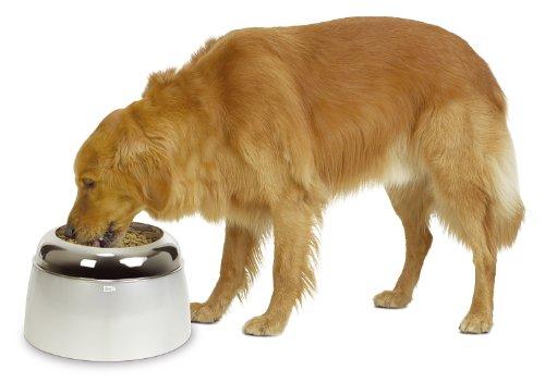 Top 10 Trinkbrunnen für Hunde Groß – Küchenutensilienhalter
