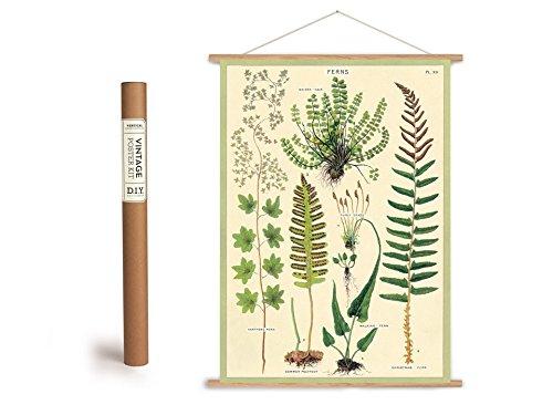 Top 9 Vintage Poster Botanik – Poster & Kunstdrucke
